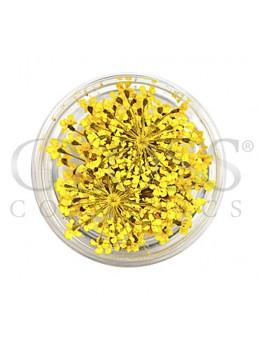 Torkade Blommor Guld